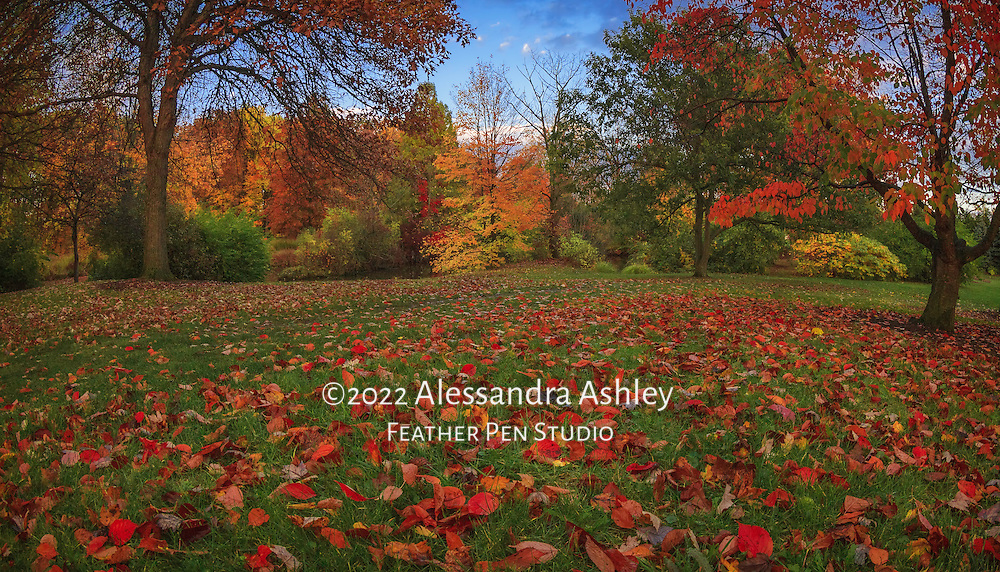 Grassy meadow covered with a carpet of fallen red leaves in late autumn at dusk.