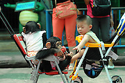 BANGKOK, March 15, 2016<br /> A baby boy interacts with two chimpanzees at a zoo in suburban Bangkok, Thailand, March 15, 2016.<br /> ©Exclusivepix Media
