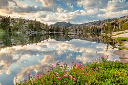 """Wildflowers at Paradise Lake 2"" - Photograph of wildflowers and puffy clouds in the early morning at Paradise Lake."