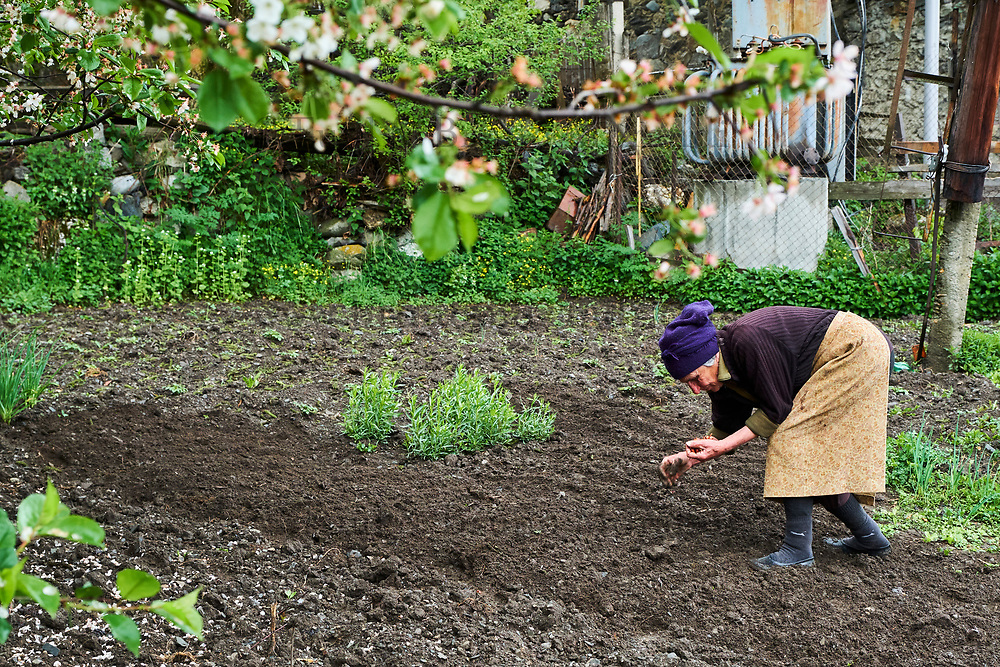Georgie, Svanetie, la Haute Svanetie, Mestia, patrimoine mondial de l'UNESCO, femme cultivant son jardin // Georgia, Svaneti, Mestia, UNESCO world heritage, woman in his garden