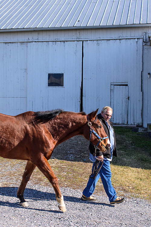 Gettysburg, Pennsylvania - February 06, 2017: Ron Krajewski walks Metro Meteor to a field at Rickety Bridge Farm in Gettysburg, Pa.<br /> <br /> Knee injuries put Metro Meteor in an early retirement, and left him unridable as a pleasure horse. Noticing his horse's affinity for head bobbing, he put a paint brush in his mouth and canvas in front. Metro Meteor's  paintings sold. Painting helped save his life, and helped save other horses' lives, too. Half the money from his paintings goes to New Vocations Racehorse Adoption Program and Gentle Giants Draft Horse Rescue.<br /> <br /> <br /> CREDIT: Matt Roth