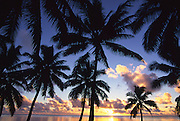 Sunset with palms, Aitutaki, Cook Islands<br />