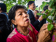 05 AUGUST 2016 - BANGKOK, THAILAND: A supporter of Yingluck Shinawatra waits for her to arrive at the Supreme Court in Bangkok. Yingluck appeared in court of Thailand Friday to start her legal defense. She was deposed by a military coup in 2014 and is being tried on corruption and mismanagement charges related to a price support plan for Thai rice farmers that was instituted while she was Prime Minister. More than two years after her government was deposed by a military coup, she is still a popular figure and hundreds of her supporters packed the area around the courthouse to greet her when she arrived at the Court.       PHOTO BY JACK KURTZ