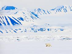 Svalbard #7 2009