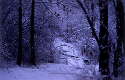 Trail through woods in winter