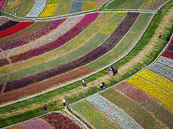 Tourists wander through matrix of tulip in full blossom in Yancheng, east China's Jiangsu Province, April 8, 2016. EXPA Pictures © 2016, PhotoCredit: EXPA/ Photoshot/ Li Xiang<br /> <br /> *****ATTENTION - for AUT, SLO, CRO, SRB, BIH, MAZ, SUI only*****
