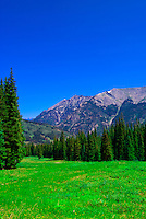 A meadow on the mountain at Copper Mountain ski resort in summer, Colorado USA