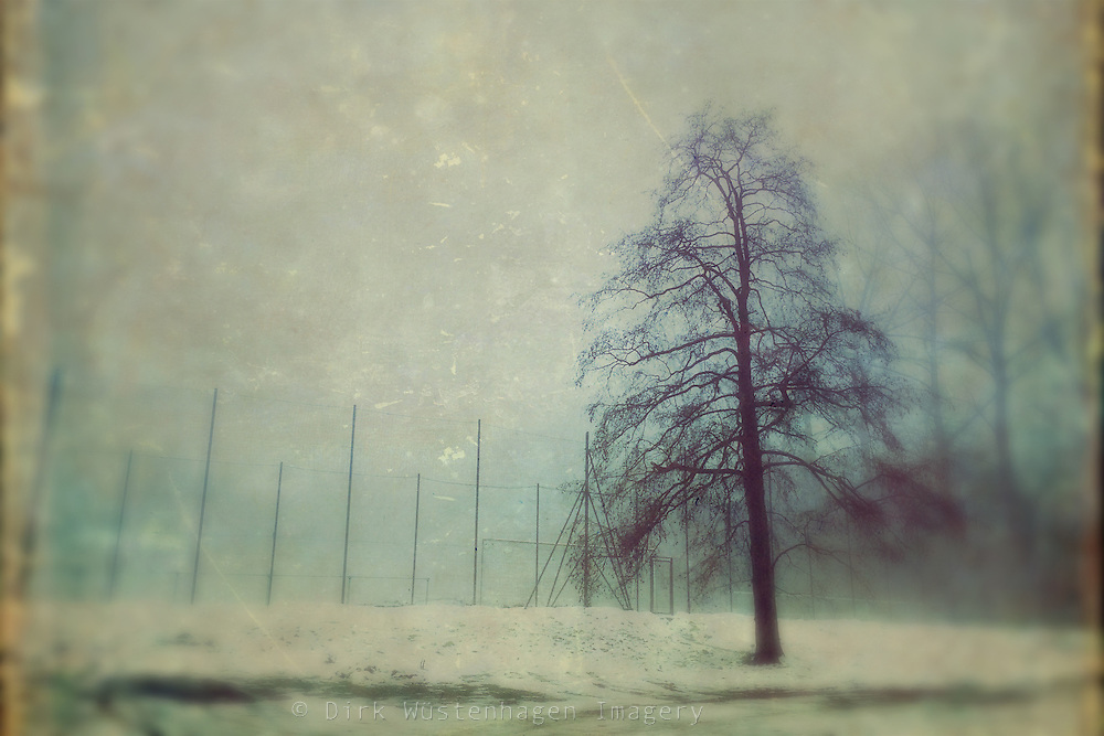 Lone tree on a foggy winter day - texturized photo processed on iPhome