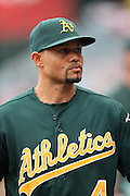 ANAHEIM, CA - JULY 21:  Coco Crisp #4 of the Oakland Athletics looks on during the game against the Los Angeles Angels of Anaheim on Sunday, July 21, 2013 at Angel Stadium in Anaheim, California. The Athletics won the game in a 6-0 shutout. (Photo by Paul Spinelli/MLB Photos via Getty Images) *** Local Caption *** Coco Crisp