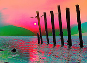 Sunset stumps