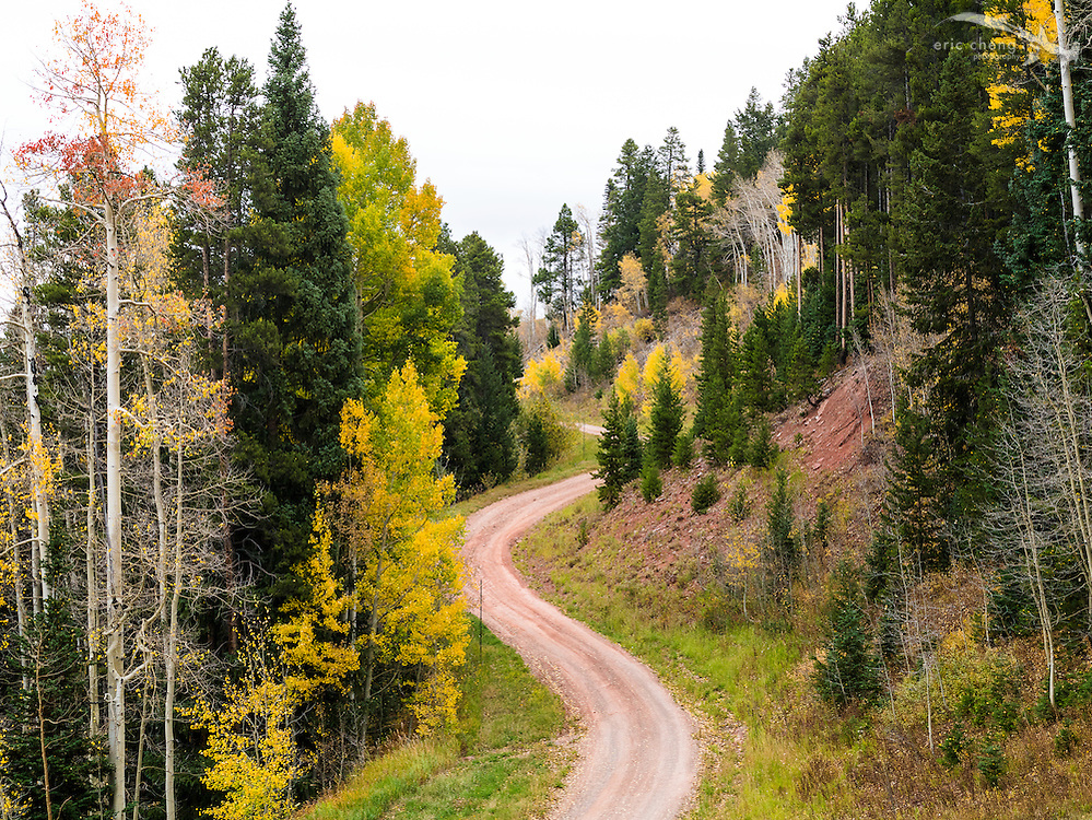 The road up Aspen Mountain, Aspen Colorado.