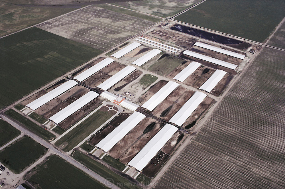 "Aerial photograph of Maddox Dairy in Riverdale, California. The Maddox Dairy is currently home to 3500 milking cows, calves, heifers and bulls. The dairy is a ""birth to milking operation"", with four, double-12, pregnant herringbone-milking parlors, free stall barns, calf raising barn and calving facilities. The dairy does their own embryo transfer work and markets their genetics worldwide. The Maddox Dairy was honored in 2001 with the Distinguished Dairy Cattle Breeder award for being a ""Visionary Holstein Breeder"", having bred more than 330 Gold Medal Dams, 502 Excellent cows, and their advancements in gene research for the Dairy industry. Surrounding the dairy are fields growing hay for the cows."