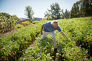 Frank Morton discusses his line of peppers at his Wild Garden Seed Farm in Philomath, OR.