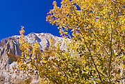 Fall aspens under Laurel Mountain from Convict Lake, Sierra National Forest, Sierra Nevada Mountains, California