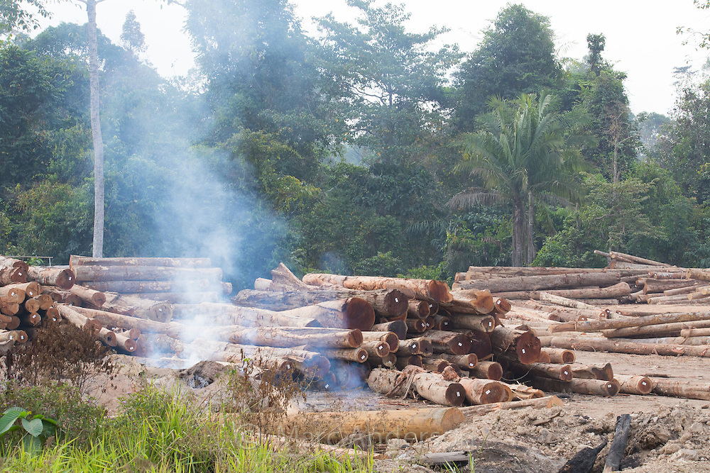 Fire burning amongst a woodpile of felled timber, tree trunks, logs in a logging camp, surrounded by secondary rainforest, Pahang province, Malaysia