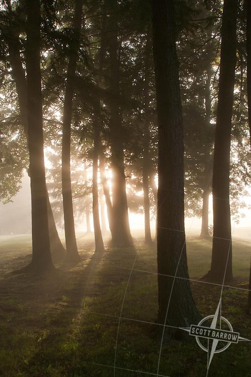 Shafts of sunlight streaming through trees in morning fog.