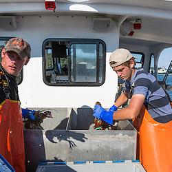 Sternmen Austin Jones (right) and Matt Bean aboard the 'Iris-Irene' at the Tenants Harbor Fisherman's Coop in Tenants Harbor, Maine.