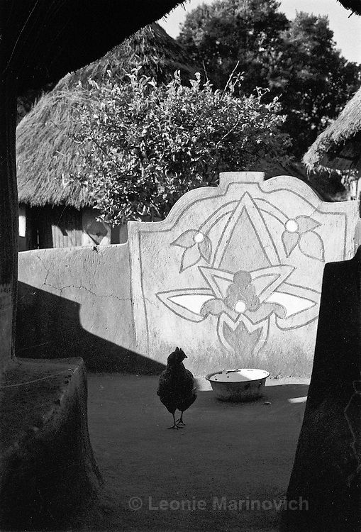 IPLM0012 , South Africa, Venda, June 2001. A chicken wanders around the burial place of the Mpephu ancestors, Tshongwedzi north of Louis Trichardt.