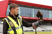 Lancashire have their own Harris Hawk to keep the ground clear of pigeons during the Lancashire County Cricket Club T20 Media Day at the Emirates, Old Trafford, Manchester, United Kingdom on 1 June 2018. Picture by George Franks.