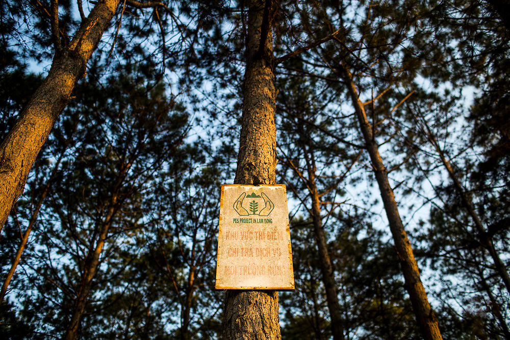 A rusted sign is tacked to a tree for PES projects in Lam Dong province in central Vietnam.