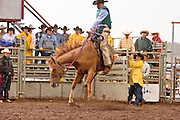 "30 JULY 2005 - WILLIAMS, ARIZONA, USA: Bronc riding at the Arizona Cowpunchers' Reunion Rodeo, the largest amateur rodeo in Arizona, in Williams, AZ, July 30. Bronc riders use their working ranch saddles in the Cowpunchers' rodeo. Professional rodeo cowboys cannot participate in the rodeo. Only working ranch cowboys and their families can participate in the rodeo, which features sports more geared to ranch life, like ""wild cow milking"" than pro rodeos, which feature bull riding. Williams, a small ranching town in northern Arizona and about an hour from the south entrance to the Grand Canyon National Park, has reinvented itself as a tourist destination. The town draws tourists going to the park and tourists who want to experience American western lifestyle. The town hosts the largest amateur rodeo in Arizona drawing contestants and spectators from across the state. PHOTO BY JACK KURTZ"