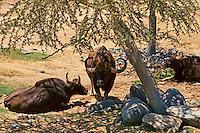 Bison Lounge