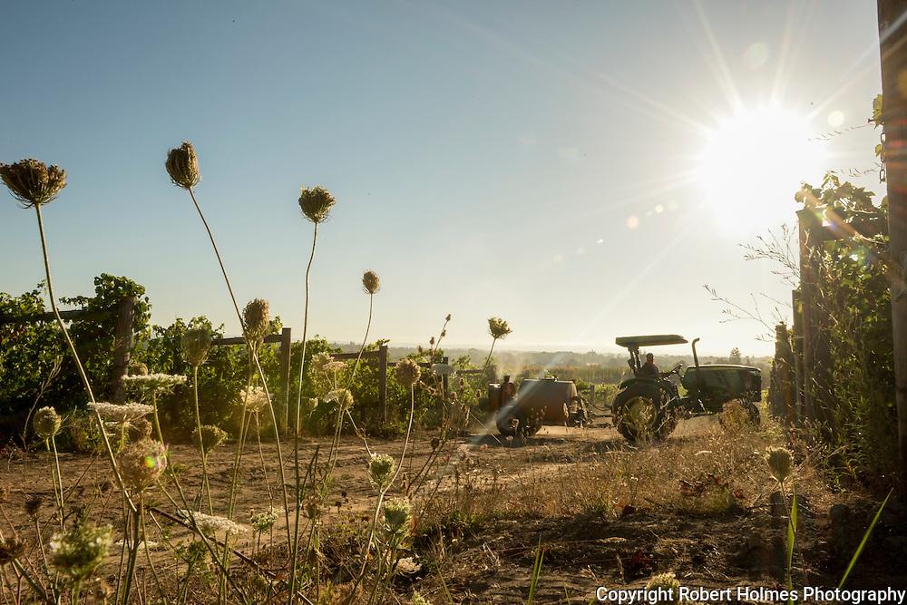 Montinore estate vineyard, Willamette Valley, Oregon