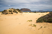 Sand dunes vegetation west coast Graciosa island, Lanzarote, Canary Islands, Spain