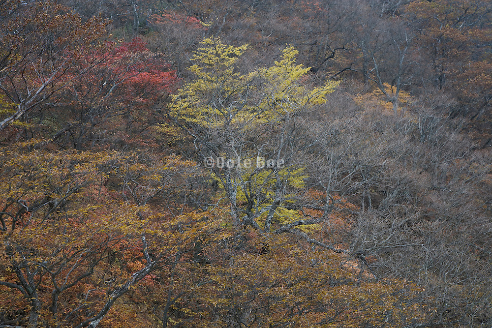 woods during fall season Japan Akechidaira