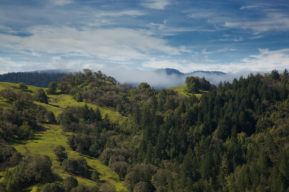 low clouds hanging in a morning valley in northern california near fortuna