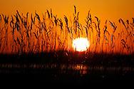 The Delta Marsh, early Thursday, April 12, 2012. (TREVOR HAGAN)