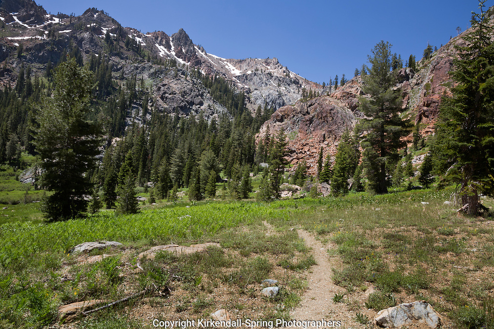 CA02802-00...CALIFORNIA - The Bear Basin Trail climbing through a green meadow in the Trinity Alps Wilderness area; Shasta-Trinity National Forest.