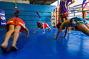 23 DECEMBER 2014 - BANGKOK, THAILAND: BAI THONG (center), 7 years old, does pushups in the ring with other boxers at the Kanisorn gym in Bangkok. She has been boxing for about 5 months. The Kanisorn boxing gym is a small gym along the Wong Wian Yai - Samut Sakhon train tracks. Young people from the nearby communities come to the gym to learn Thai boxing. Muay Thai (Muai Thai) is a mixed martial art developed in Thailand. Muay Thai became widespread internationally in the twentieth century, when Thai boxers defeated other well known boxers. A professional league is governed by the World Muay Thai Council. Muay Thai is frequently seen as a way out of poverty for young Thais. Muay Thai professionals and champions are often celebrities in Thailand.     PHOTO BY JACK KURTZ