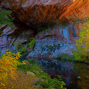 Beautiful colors along a creek - Oak Creek Canyon, AZ