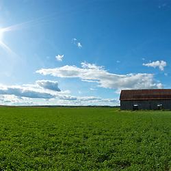 old barn in a field on a sunny day. Photographe: Marc Lapointe, Sainte-Thérèse, Blainville, Québec