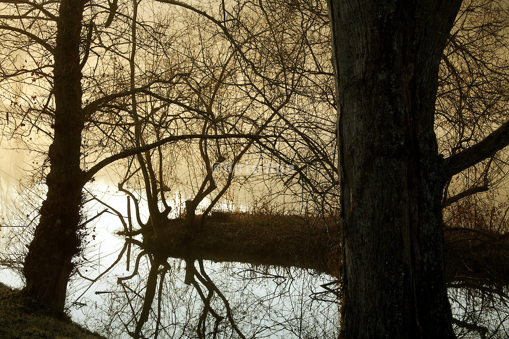fog with tree twigs by a lake
