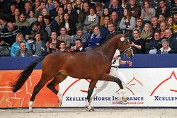 362, Kaiser DVB<br /> KWPN Stallionshow - 's Hertogenbosch 2018<br /> © Hippo Foto - Dirk Caremans<br /> 03/02/2018