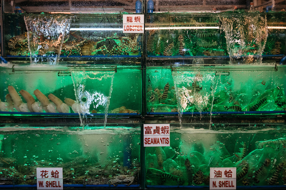 Green lights light the tanks at a Chinese fish market stall at Dampa market in Manila, Philippines. The Chinese company was selling everything from lobster to panther grouper. Customers then would have it prepared immediately at one of the dozens of restaurants lining the outside of the market.