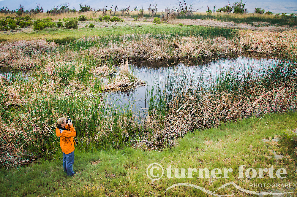 Woman bird watches and looks through binoculars in marsh area of Owens River, Eastern Sierras, California.