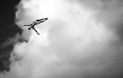 PAREDES BERNAL Jonathan MEX<br /> High Diving - Men's 27m high dive preliminaries<br /> Day 11 03/08/2015<br /> XVI FINA World Championships Aquatics Swimming<br /> Kazan Tatarstan RUS July 24 - Aug. 9 2015 <br /> Photo Giorgio Perottino