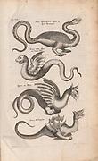 Copperplate print of Mythological creatures and sea monsters from Johannes Jonston book of nature 'Dr. I. Ionstons Beschrijving vande natuur der vogelen neffens haer beeldenissen in koper gesneden' Published in Amsterdam in 1660