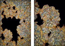 I was just drawn to the iridescence of this broken and corroded Georgian wired glass window. In the end I decided upon a diptych of two shots, a close up in conjunction with a wider shot as I loved the balance of positive and negative spaces between the two.<br />