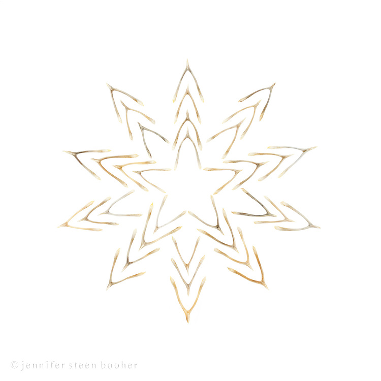 Lucky Star 4 : a star made of wishbones