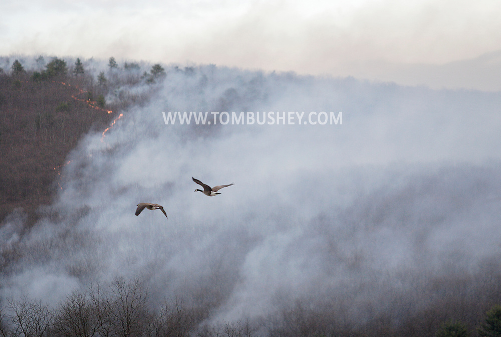 Wurtsboro, N.Y.  - A pair of Canada geese fly in front of a forest fire burning on the Shawangunk Ridge in Sullivan County on April 18, 2009.
