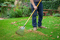 Raking up leaves from a lawn using a tine rake