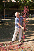 Frank Morton discusses drying red amarath at his Wild Garden Seed farm in Philomath, OR.