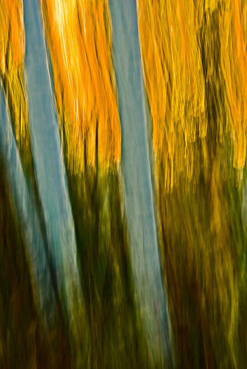 Photograph of trees in fall colors taken in the Adirondacks using panning motion with camera in an irregular rapid motion and slow shutter speed to render image as painterly or impressionistic.