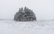 The Pine round on Northchurch Common, Ashridge Estate, photographed with snow.