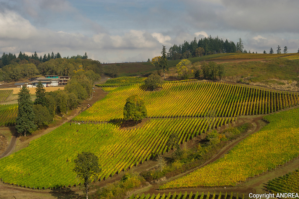Aerial view over Alexana winery & estate vineyard, Dundee Hills, Willamette Valley, Oregon