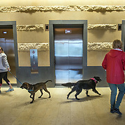 WASHINGTON, DC - OCT07:  Charity Struthers (right) and her dog Benny pass Amber Willis and her dog Brody, outside the elevators of the Park Chelsea Apartments, October 7, 2016, in Washington, DC. As new apartment buildings continue sprouting around downtown DC, developers know that a large percentage of renters in the city have dogs and make their choices of buildings based largely on pet-friendliness. So they go out of their way to be welcoming to dogs.  (Photo by Evelyn Hockstein/For The Washington Post)